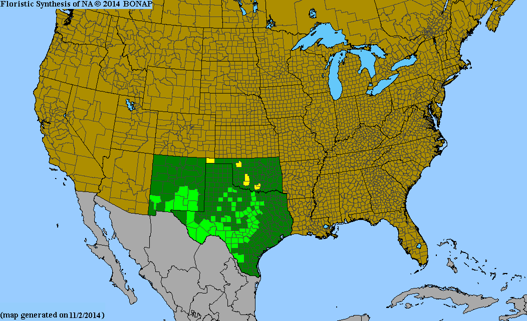 County distribution map of Dalea frutescens - Black Prairie-Clover