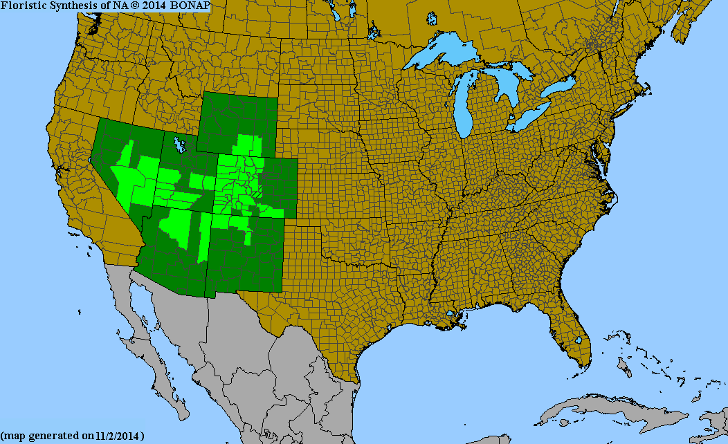 County distribution map of Ericameria parryi var. parryi - Parry's Rubber-Rabbitbrush