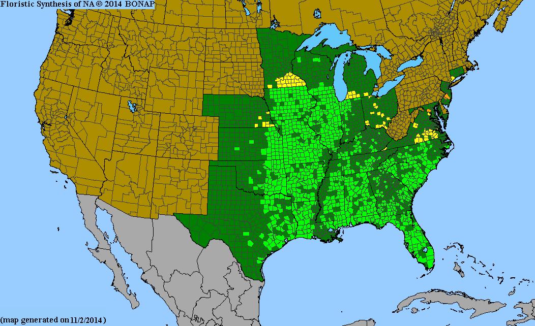 Eryngium Yuccifolium Button Eryngo From North Creek Nurseries - Map of rattlesnakes in us
