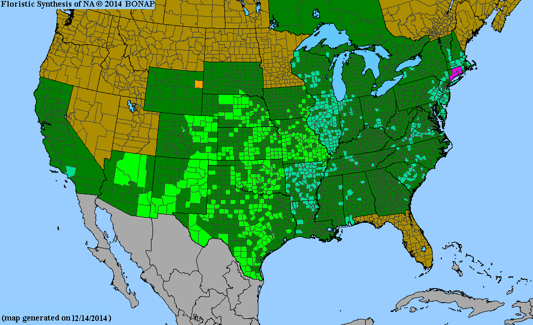 County distribution map of Froelichia gracilis - Slender Snake-Cotton