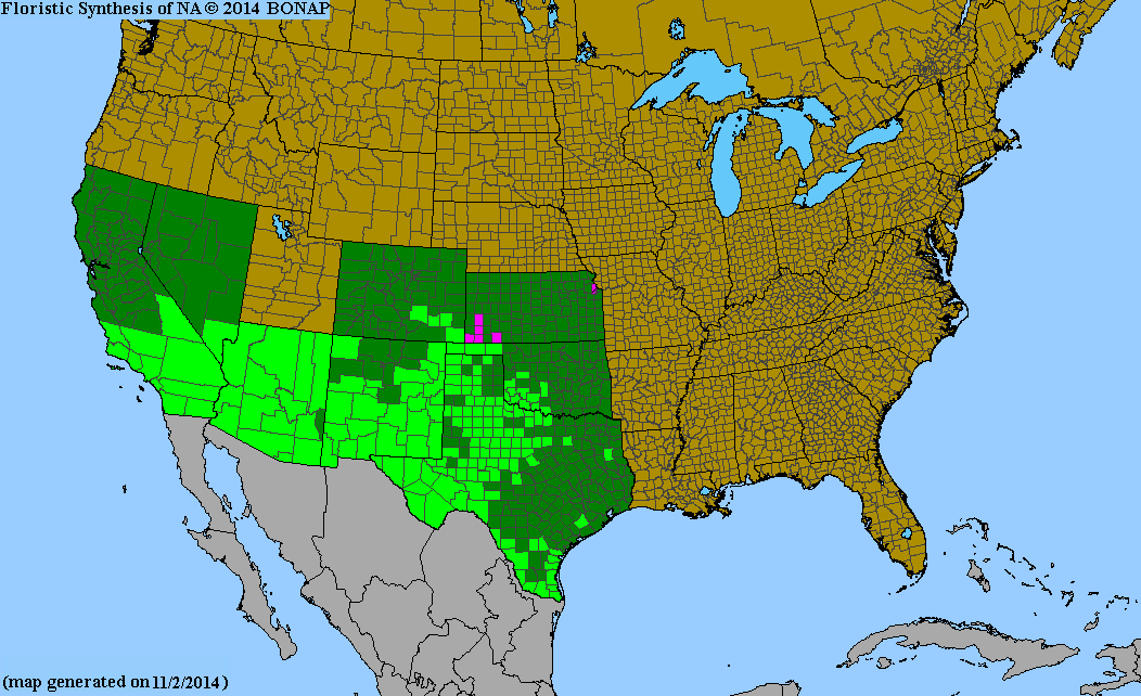 County distribution map of Hoffmannseggia glauca - Waxy Rush-Pea