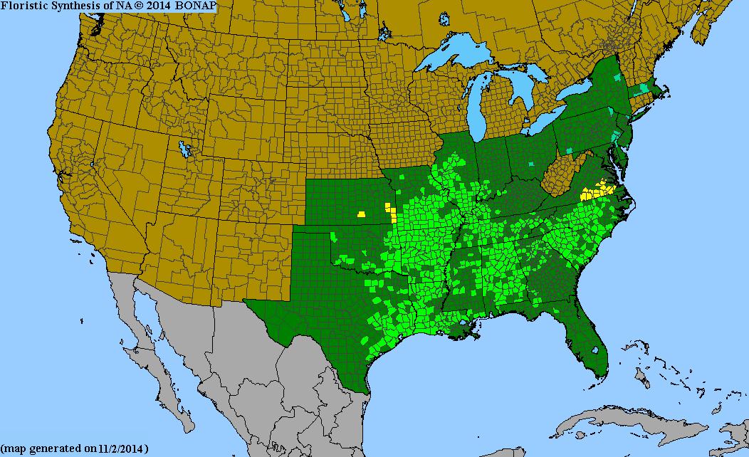 Amsonia Tabernaemontana Species Page ISB Atlas Of Florida Plants - Allergy in us map