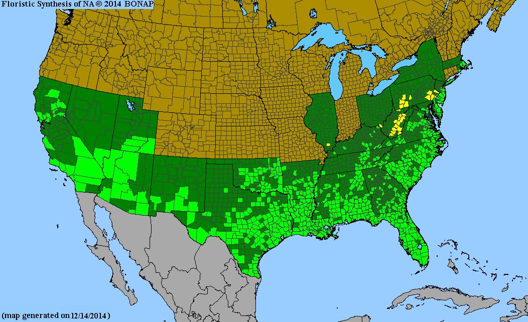 Andropogon Glomeratus Species Page ISB Atlas Of Florida Plants - Allergy in us map