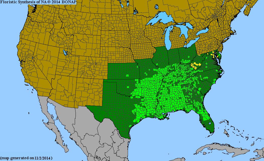 Arundinaria Gigantea Species Page ISB Atlas Of Florida Plants - Allergy in us map