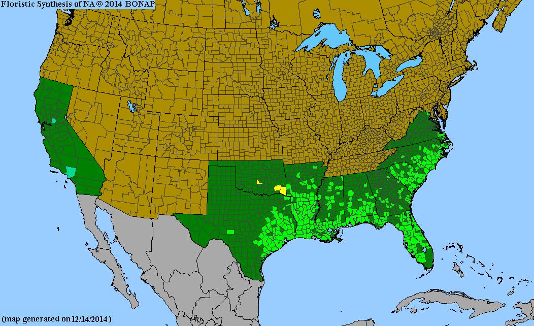 Axonopus fissifolius - Species Page - ISB: Atlas of Florida Plants