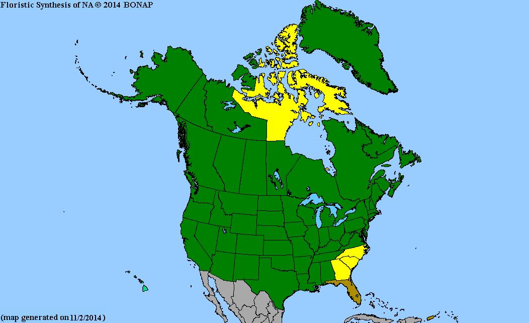 Eleocharis Elliptica 2013 BONAP North Ameri...